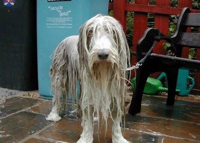 wet doggie.jpg